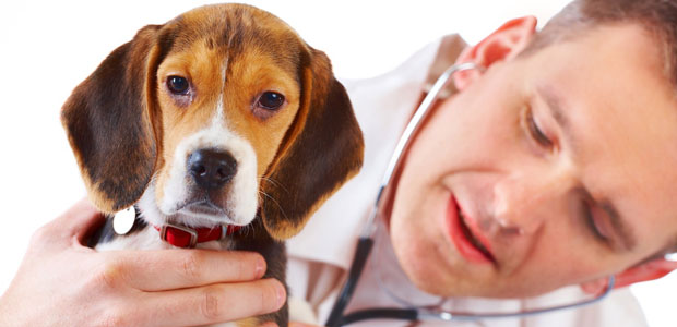 Dermatite Nel Cane Cause Sintomi E Cure Komepetfood
